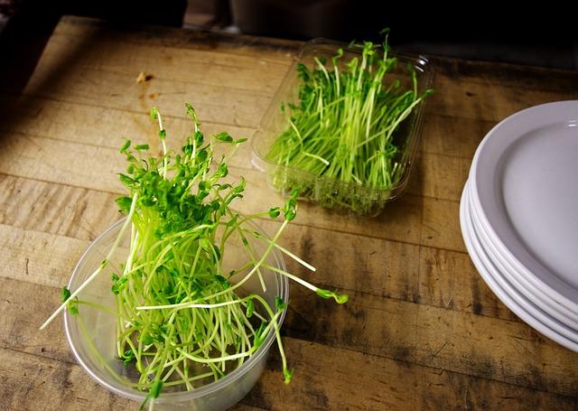 nádobky s klíčícími rostlinkami na stole s talíři